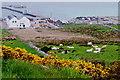 B8833 : Meenlaragh - Hillside and pier by Suzanne Mischyshyn