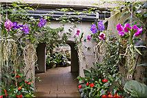 TQ1877 : Walkway, Princess of Wales Conservatory, Kew Gardens, Surrey by Christine Matthews