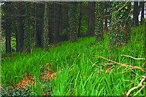 C0934 : Capuchin Friary - Scene along coastal path by Joseph Mischyshyn
