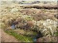 NN9203 : Boggy ground by James Allan