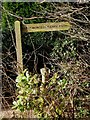 SO8381 : North Worcestershire Path sign, Blakeshall Lane by P L Chadwick