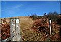 SO2186 : Land near Cwm Moch by Dave Croker