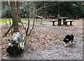 SP8809 : Picnic Area with Dog Sculpture, Wendover Woods. by Chris Reynolds
