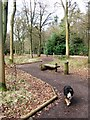 SP8908 : All Ability Trail, Wendover Woods by Chris Reynolds