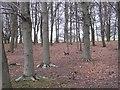 NZ2276 : Woodland, Blagdon Park by Richard Webb