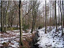 NY9562 : Winter woodland by Brian Norman