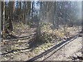 TQ6357 : Footpath junction in Valley Wood by David Anstiss