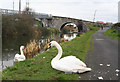 O1337 : Swans and the Royal Canal by William England