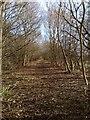 TF6820 : Path of dismantled railway line by Martin Pearman