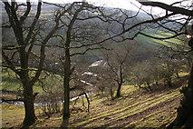 SD9772 : Trees near Kettlewell by Helen Wilkinson