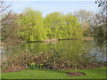 SU9850 : View across the lake on the university campus by Nick Smith