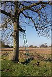 TL8063 : Deer culling platform, Little Saxham by Bob Jones
