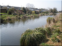 SS9712 : Suburban gardens, adjoining the canal, at Tiverton by Roger Cornfoot