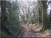 SP3177 : The lane down to Canley Ford by E Gammie