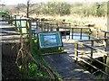 SM9202 : Wildlife area at Pwllcrochan by Shaun Butler