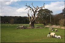 TL8162 : Field in Ickworth Park by Bob Jones