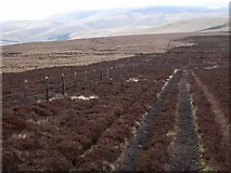 NT8215 : Pennine Way at Mozie Law by Oliver Dixon