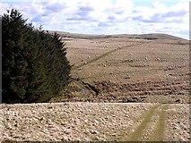 NT9108 : Cheviot landscape by Oliver Dixon