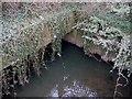 SP0177 : River Rea Culvert  Exit , Tessall Lane Bridge. by Roy Hughes