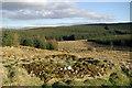 NS5211 : Sheepfold & firebreak west of the Beoch Lane by Leslie Barrie