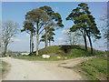 SN0113 : Picton Motte Dungledi by R Simpson