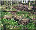 J3268 : Log, Barnett Demesne by Rossographer