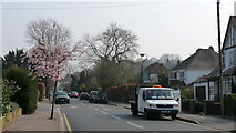 TQ3060 : Street Scene in Old Lodge Lane by Peter Trimming
