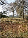 SO6210 : Last year's leaves, Saintlow Inclosure by Pauline E