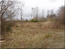 S9725 : Cleared woodland near Healthfield by David Hawgood