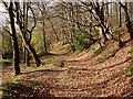 SO6412 : Cinderford Brook Path, Forest of Dean by Eric Soons