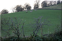 NO2650 : Sheep on the Hill of Loyal by Mike Pennington