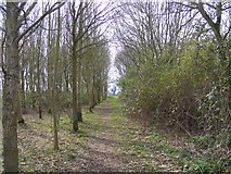 TM3761 : Start of the Bridleway to Deadman's Lane by Adrian Cable