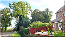 TF1258 : Church Lane, Timberland by ALAN TOLLEY
