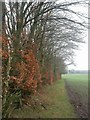SU1013 : Alderholt, hedge by Mike Faherty