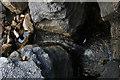 NY7739 : Scalloped limestone by Helen Wilkinson