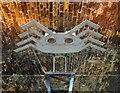 SK3588 : Close up of 'Boris' the spider by Steve  Fareham