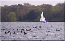 SJ6576 : Sailing on the Mere by Catherine