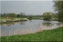 SK3527 : River Trent to the east of Ingleby by Nigel Aspdin