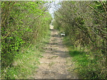 TQ5359 : North Downs Way up to Otford Mount by David Anstiss