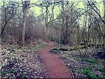 SO9596 : Peascroft Woodland Path by Gordon Griffiths
