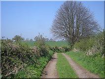 SJ4335 : Farm track near Welshampton by Row17