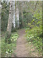 SW9047 : A woodland path on the Trewithen Estate by Rod Allday