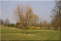 SU5598 : Lone tree at Nuneham Courtenay Arboretum by Steve Daniels