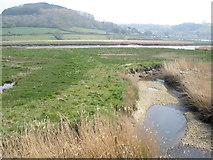 SY2591 : Creek, near the Axe estuary by Roger Cornfoot