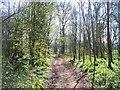 SS9614 : Mid Devon : Knightshayes - Impey Walk by Lewis Clarke