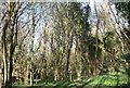 SS8577 : Woodland, Cwm y Befos by eswales