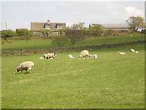 SE0021 : Sheep with Sykes Farm in the distance by Alexander P Kapp