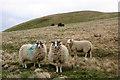 NY3037 : Rough grazing by Helen Wilkinson