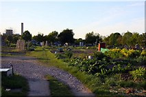 SU5290 : Allotments on Broadway in Didcot by Steve Daniels
