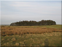 NY9569 : Pastures and plantation south of Errington Hill Head (2) by Mike Quinn
